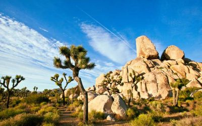 SUNSET MAGAZINE: Where to stay & dine in Joshua Tree N.P.